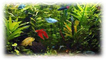 compra de peces de acuario