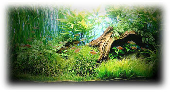 Iluminaci n del acuario plantado for Lista de peces tropicales para acuarios