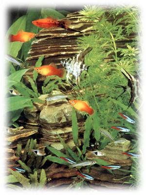 Peces tropicales de acuario for Comida para peces tropicales acuario